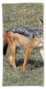 Black Backed Jackal Bath Towel