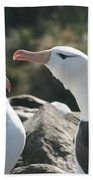 Black Browed Albatross Pair Bath Towel
