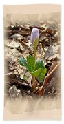 Bloodroot Wildflower - Sanguinaria Canadensis Bath Towel