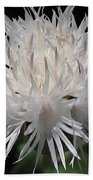 Centaurea Named The Bride Bath Towel