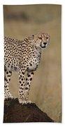 Cheetah On Termite Mound Bath Towel