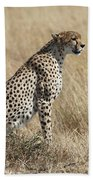 Cheetah Searching For Prey Bath Towel