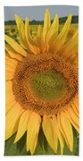 Common Sunflower Helianthus Annuus Bath Towel