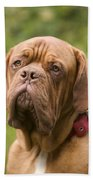 Dogue De Bordeaux Bath Towel