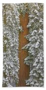 Giant Sequoias And Snow  Hand Towel by Yva Momatiuk John Eastcott