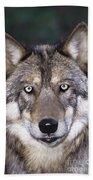 Gray Wolf Portrait Endangered Species Wildlife Rescue Bath Towel