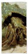Green Striped Hermit Crab Bath Towel
