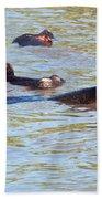 Hippopotamus Group In River. Serengeti. Tanzania. Bath Towel