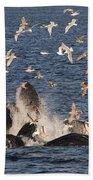Humpback Whales Feeding With Gulls Bath Towel