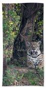 Jaguar Panthera Onca, Pantanal Bath Towel
