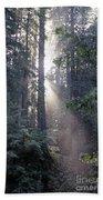 Jedediah Smith Redwoods State Park Redwoods National Park Del No Bath Towel