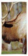 Male Elk Bath Towel
