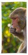 Macaque Eating An Orange Bath Towel