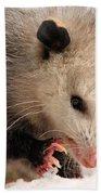 North American Opossum In Winter Bath Towel