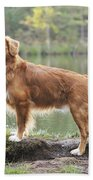 Nova Scotia Duck Tolling Retriever Bath Towel