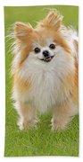 Pomeranian Dog Bath Towel