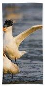 Royal Terns Bath Towel