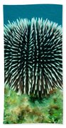 Sea Urchin Bath Towel