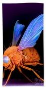 Sem Of A Fly Drosophila Bath Towel