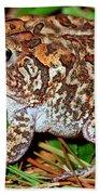 Southern Toad Bufo Terrestris Bath Towel