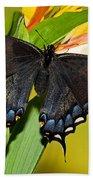 Tiger Swallowtail Butterfly, Dark Phase Bath Towel