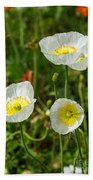 White Iceland Poppy - Beautiful Spring Poppy Flowers In Bloom. Bath Towel