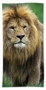Lion Dafrique Panthera Leo Bath Towel