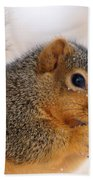 Squirrel  Bath Towel
