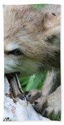 Gray Wolf Pup Bath Towel