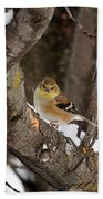 American Goldfinch In Winter Bath Towel
