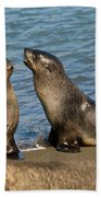 Antarctic Fur Seals Bath Towel