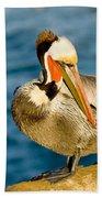 Brown Pelican Preening Bath Towel