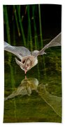 California Leaf-nosed Bat At Pond Bath Towel