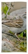 Chipping Sparrow Bath Towel