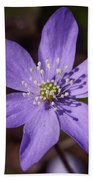 Common Hepatica Bath Towel