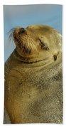 Galapagos Sea Lion Zalophus Wollebaeki Bath Towel
