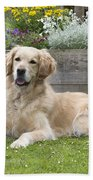 Golden Retriever Dog Bath Towel