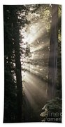 Jedediah Smith Redwoods State Park Redwoods National Park Del No Bath Towel
