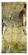 Kangaroo Bath Towel