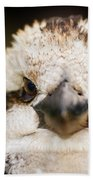 Kookaburra Bath Towel