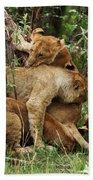 Lion Cubs On The Masai Mara  Hand Towel