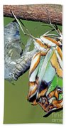 Malachite Butterfly Metamorphosis Bath Towel