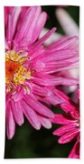 Marguerite Daisy Named Summer Song Rose Bath Towel
