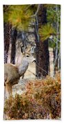 Mule Deer Bath Towel