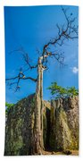 Old And Ancient Dry Tree On Top Of Mountain Bath Towel