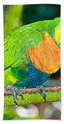 Rainbow Lorikeet Bath Towel