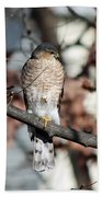 Sharp-shinned Hawk 2 Bath Towel