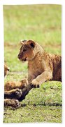 Small Lion Cubs Playing. Tanzania Bath Towel