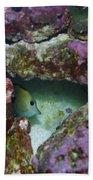 Tropical Fish In Cave Bath Towel