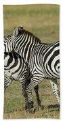 Zebra Males Fighting Bath Towel